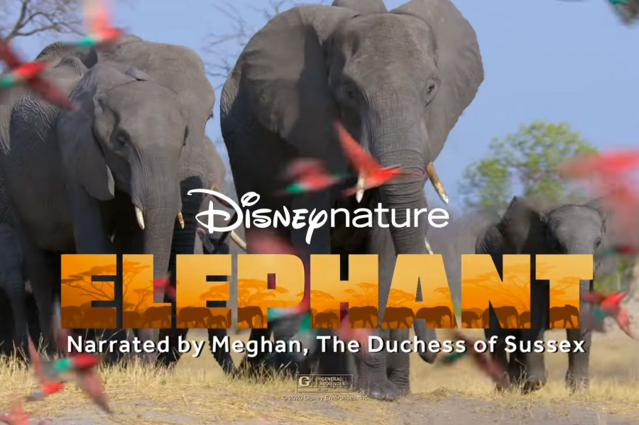 First Look at  Disneynature's 'Elephant' Premiering on Disney+ Early This AprilFind Mickeys